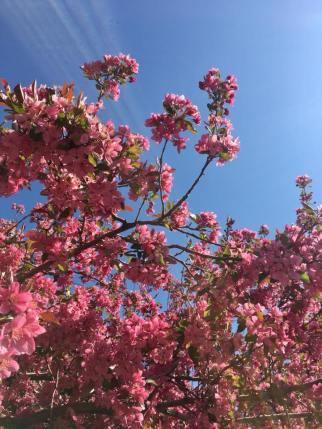 Spring, Colorado